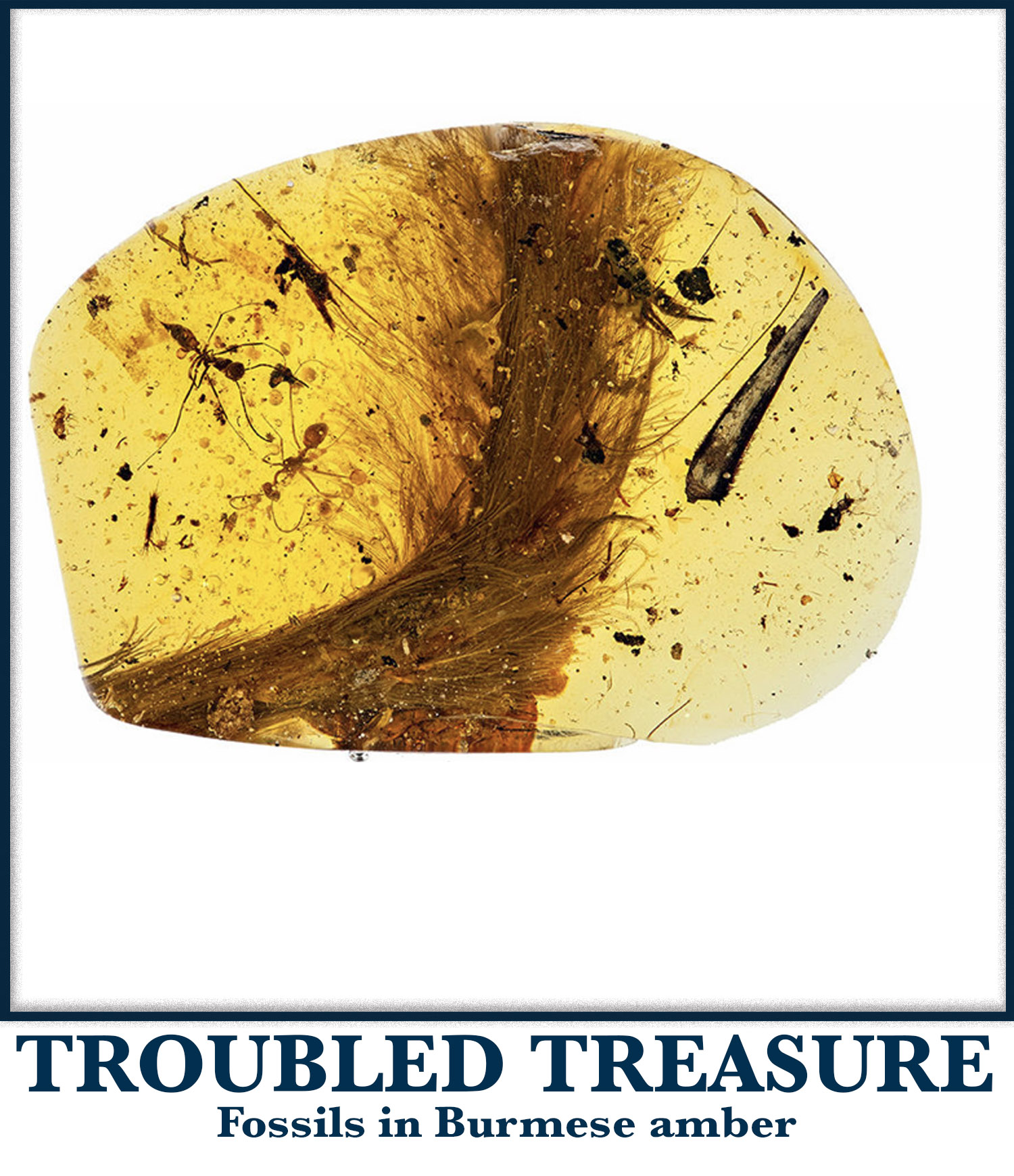 Troubled Treasure
