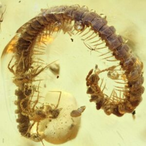 Bugs and Insects in Amber